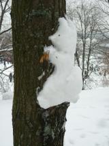 И от страха я на дерево залез