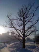 Мороз и солнце!