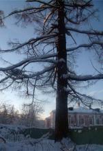 Усадьба в Битцевском парке.