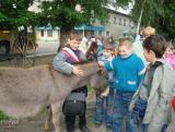 Мини зоопарк в городе Гжель