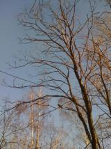 Одинокий ворон