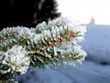 И елкам бывает холодно