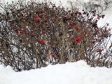 Яркие краски зимы