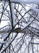 В снежном плену