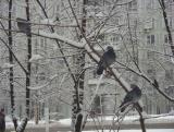 В ожидании завтрака на самой доброй московской улице