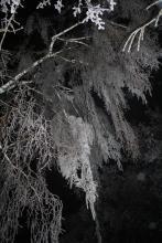 Московские снежные кружева почти как вологодские